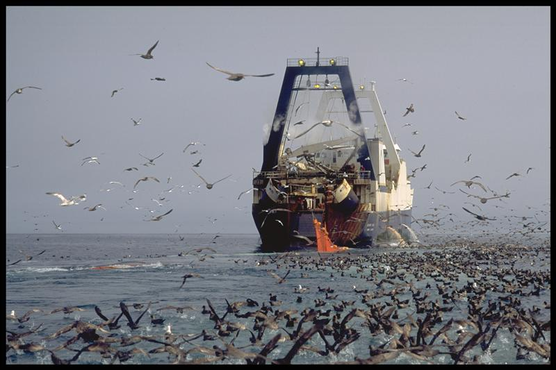 oceans issues threats greenpeace