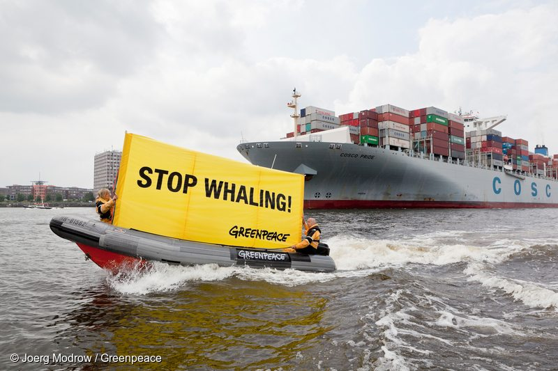 Greenpeace activists protest against the transport of fin whale meat.