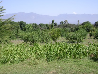 View from Navdanya biodiversity farm