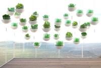 balcony hanging garden  Green Prophet