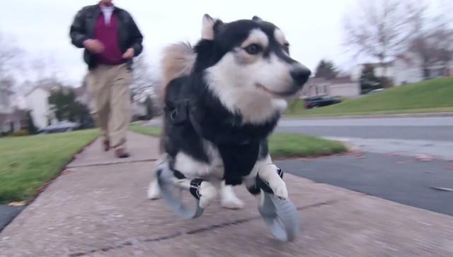 3D impreso patas de perro