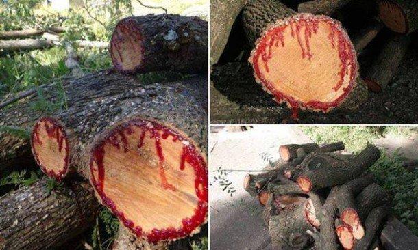 dragon-blood-tree-yemen