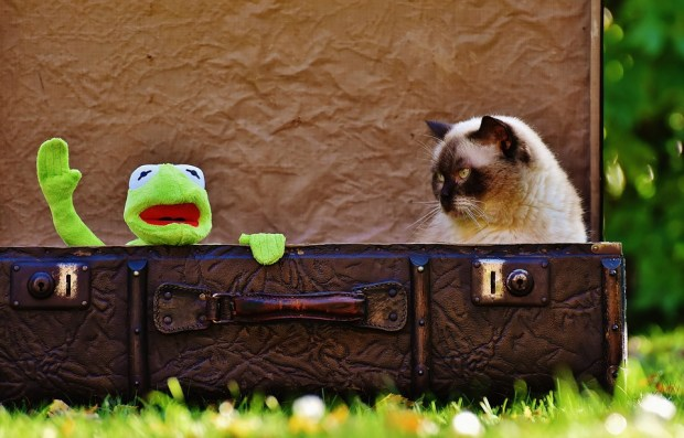 cat and toy frog