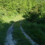 Sentiero 6 - Sentiero comodo a Coldipeccio