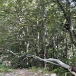 Sentiero 4 - Segnavia
