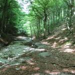 Sentiero 31 - I Boschi