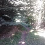 Sentiero 17 - Per boschi...