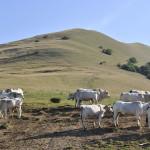 Sentiero 23 - Mucche al pascolo - Monte Motette