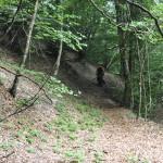 Sentiero 11 - ...e per boschi...