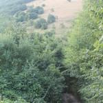 Sentiero 233 - Mulattiera