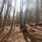 Pollino trek - Boschi