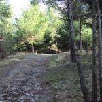Sentiero 290 - Tra abeti e cipressi