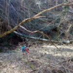Sentiero 279 - Il Fosso di Beto, Alberi abbattuti