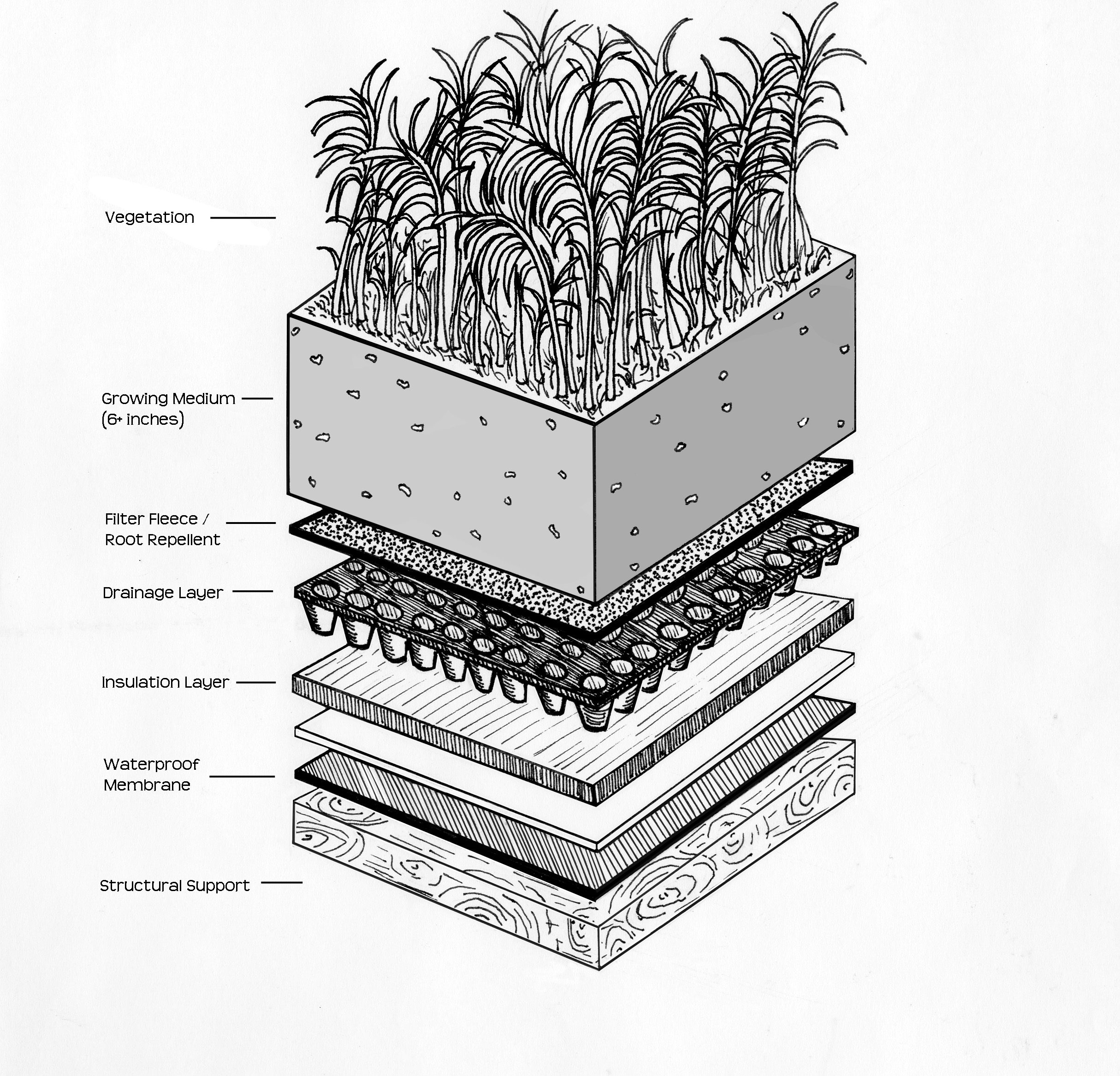 green roof water runoff diagram 99 cherokee stereo wiring intensive vs extensive roofs whats the difference