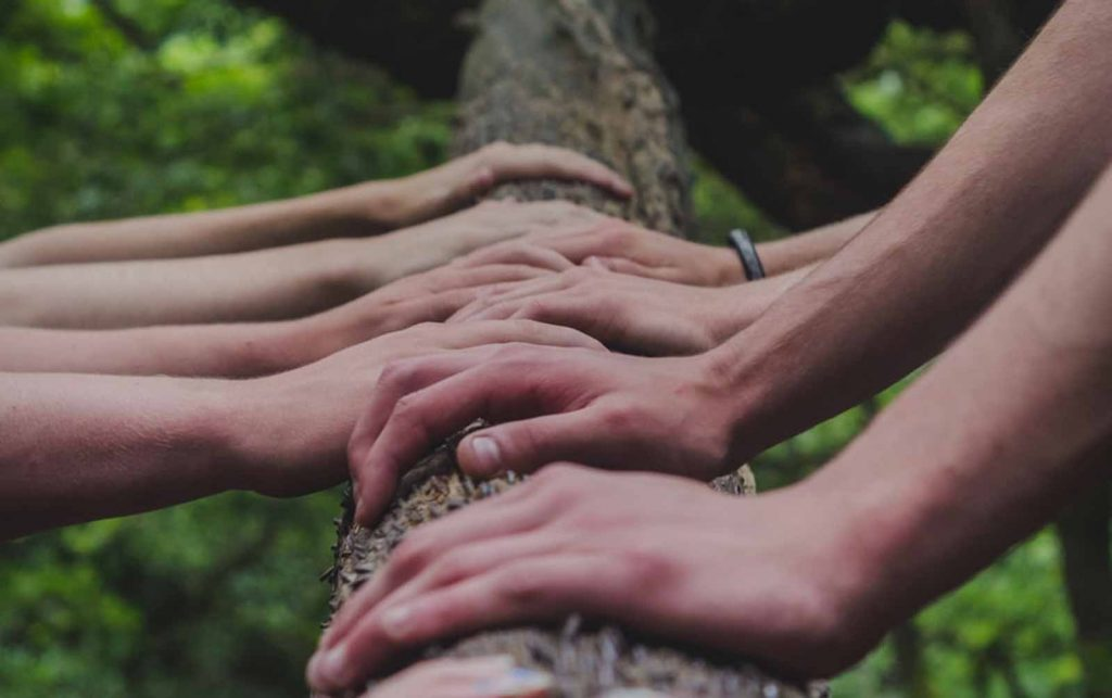 A number of hands on a tree to represent Executive and Leadership Team Facilitation