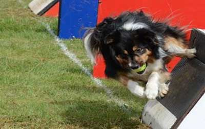 Sarah's dog, Buffy, playing Flyball as her dogs are her hobby which gives her confidence