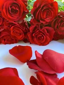 roses-Greenrose