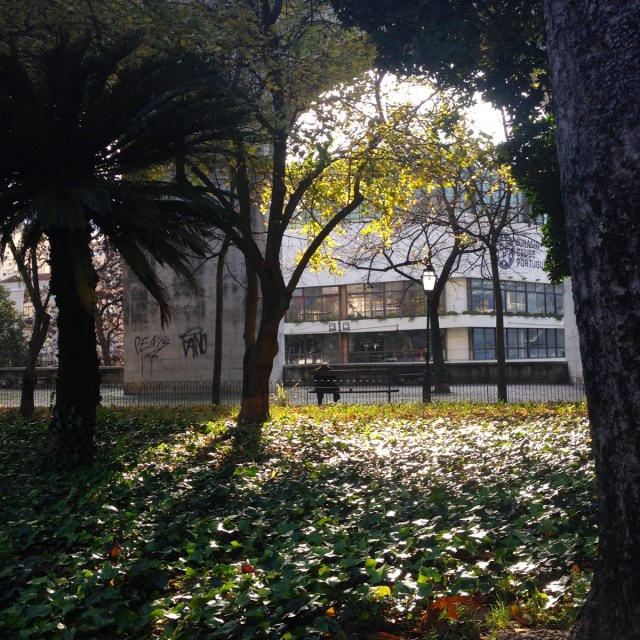 Gibt es wahre Schönheit einzig in der Natur? Eine berechtigte Frage bei diesem Anblick im Maulbeergarten des Straßenbezirks Largo do Rato in Lissabon.