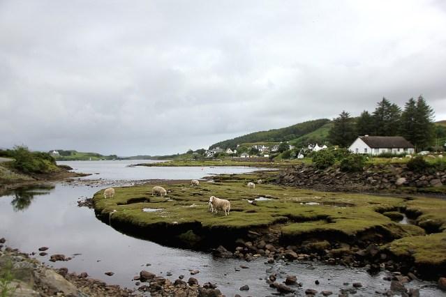 Vor der schottischen Aufklärung war Schottland vor allem ein Agrarland  (Image by Greg Montani from Pixabay.com).