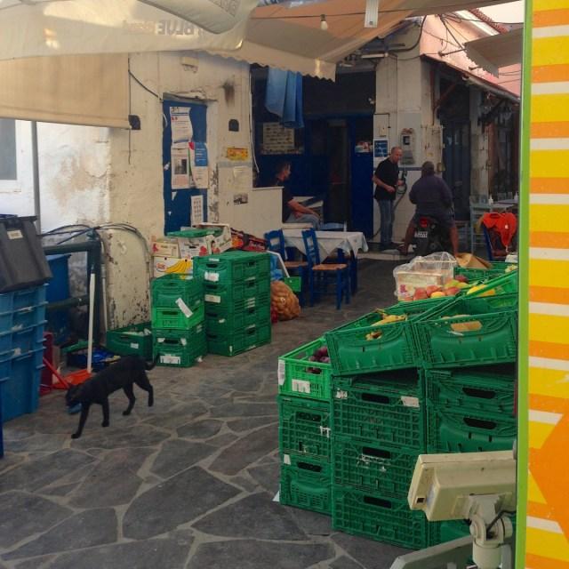 Schwarze Katze oder Panther: Auf der griechischen Insel Ägina