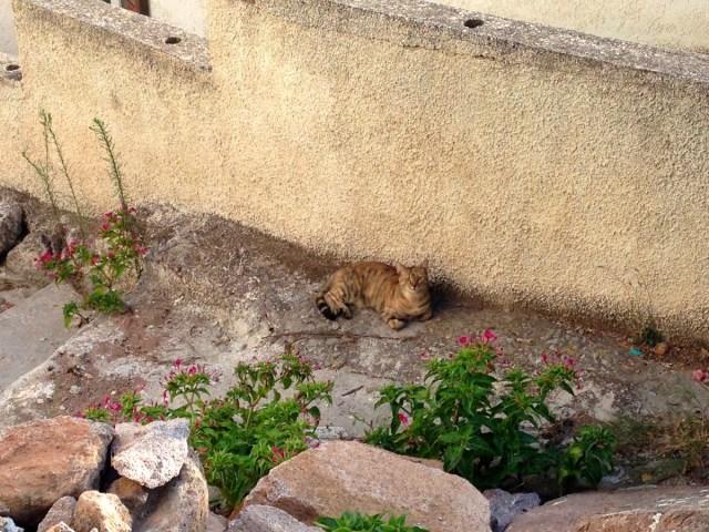 Auch auf der Insel Poros gibt es Straßenkatzen wie im Rest Griechenlands.