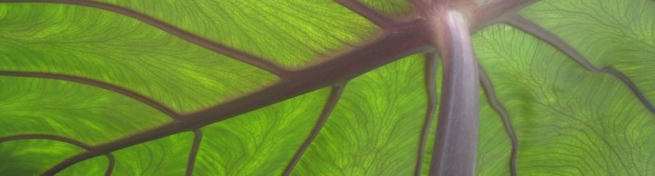 GreenSurfaceResource.com