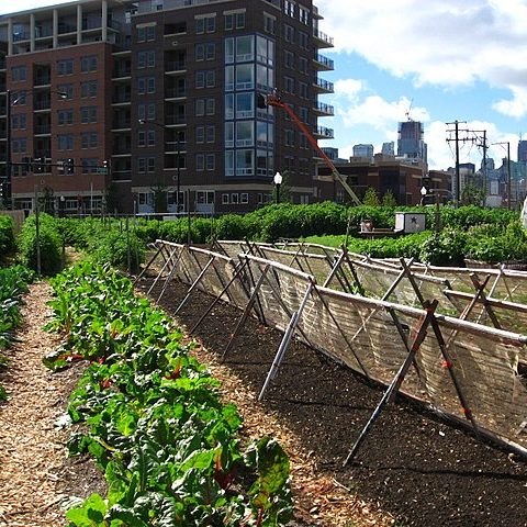 ASUA (Adaptable smart urban agriculture)