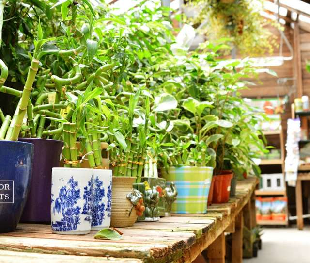 Whether Your Goal Is To Clean The Air Add Some Color Or Beautify Your Home Indoor Plants Are The Perfect Solution Every Week We Receive Large Shipments