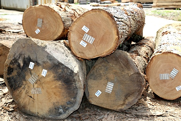 Logs and Timberland services in Wallingford KY | Greentree