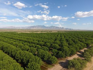 Green Valley Pecan