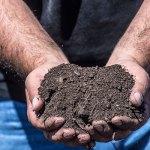 GVPC orhard compost