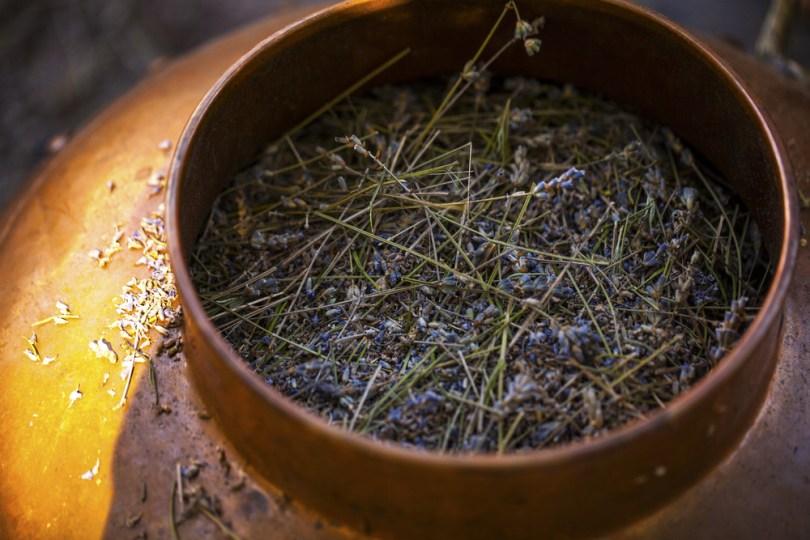 distillation huile essentielle d'hiver