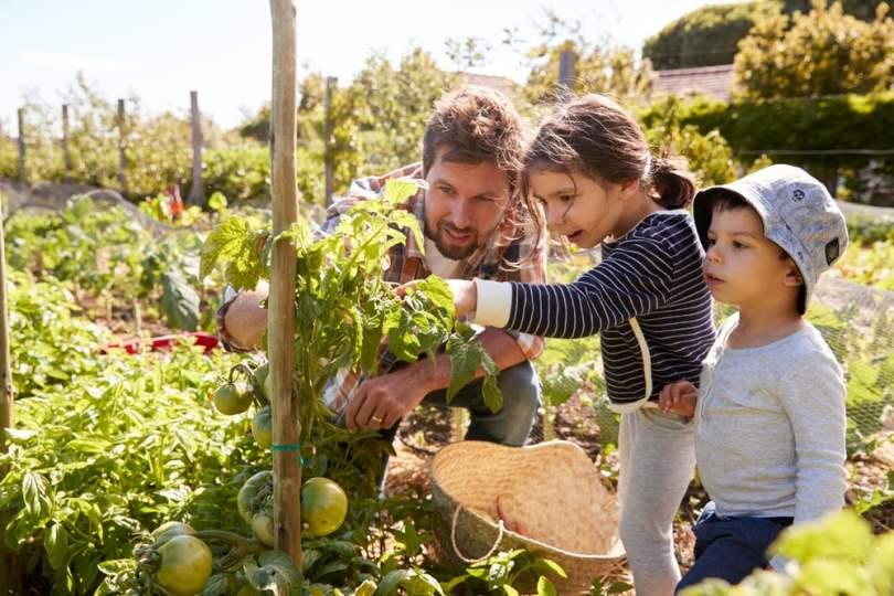Produire ses légumes, une démarche écologique.