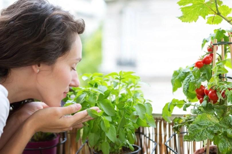 agriculture urbaine : potager au balcon