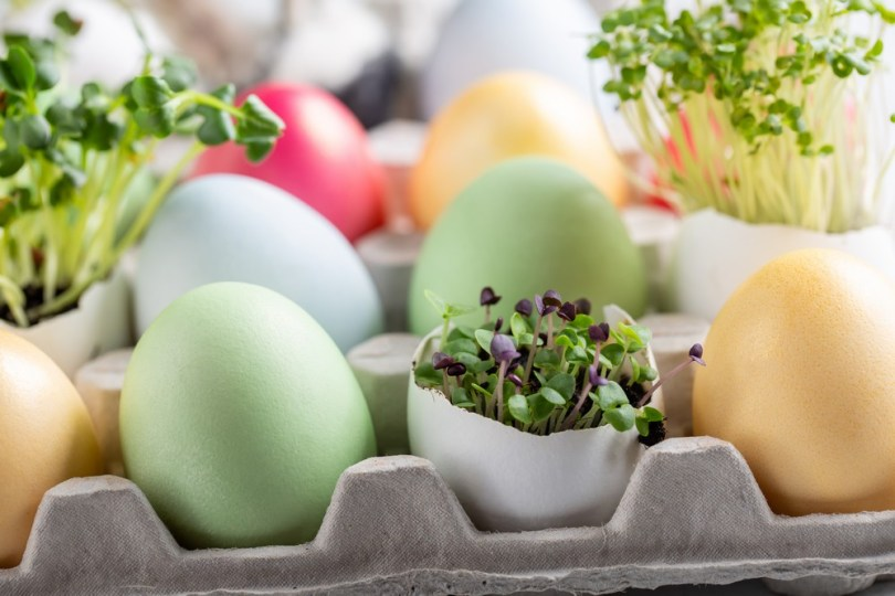 œufs de Pâques : mini-potager aromatique
