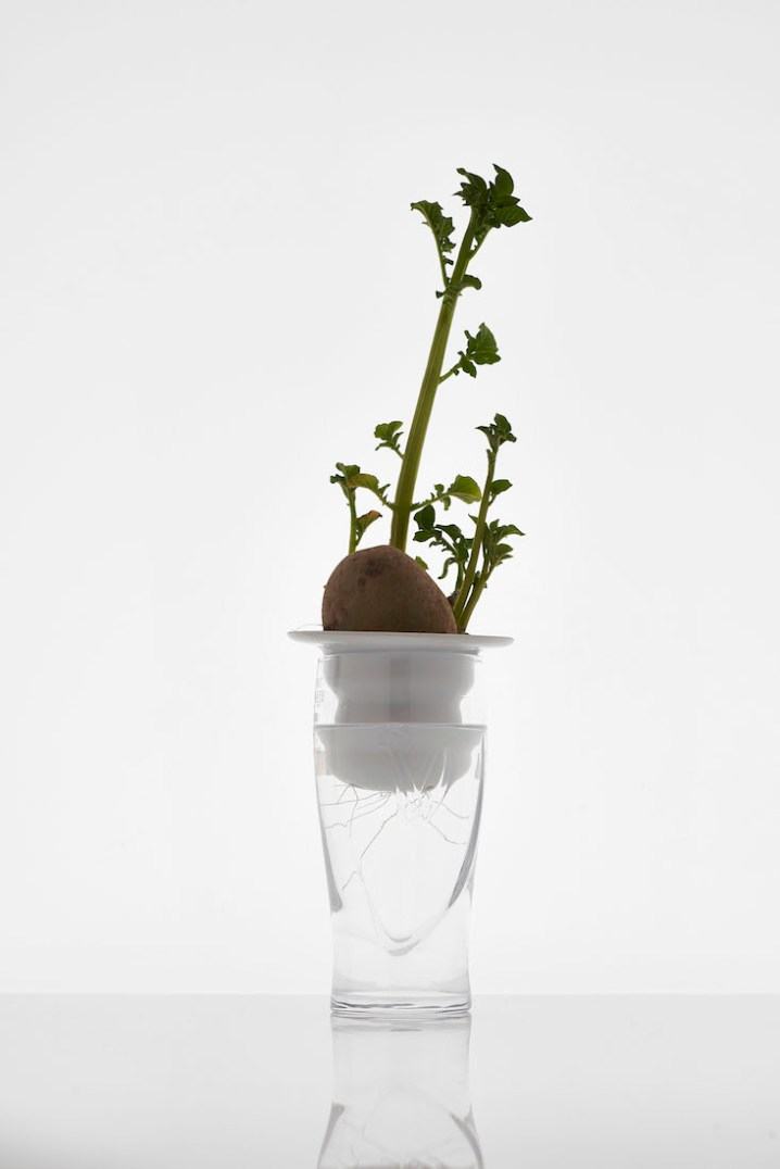 Plantation Series 2 (ceramic plant propagation) by Alicja_Patanowska