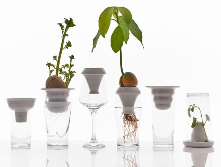 Plantation Series (ceramic plant propagation) by Alicja_Patanowska