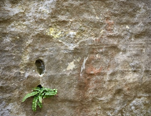 Photo: Fern in mountain rock (Luxembourg City) by Mickey Gast for Green with Purpose