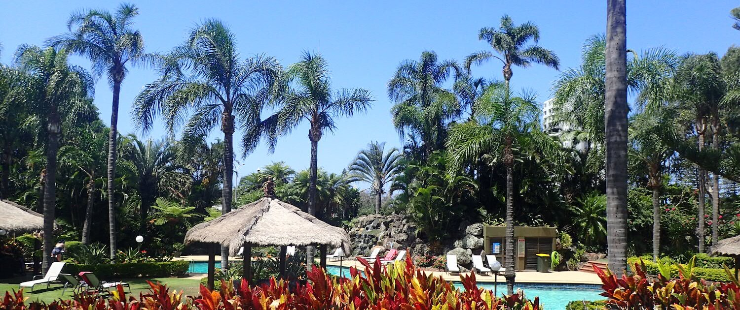 resort palm trees around pool maintained by Green Works Tree Care