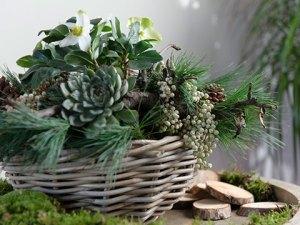 Stukje natuur voor op tafel