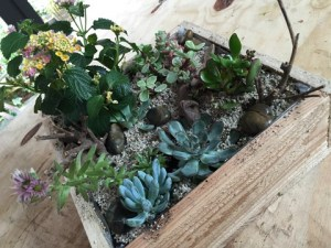 Vetplantjes in houten bak