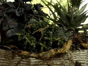 Eens wat anders met vetplanten