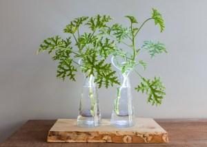 Verlichte plantjes