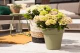 Hortensia's: bloeiend de zomer in