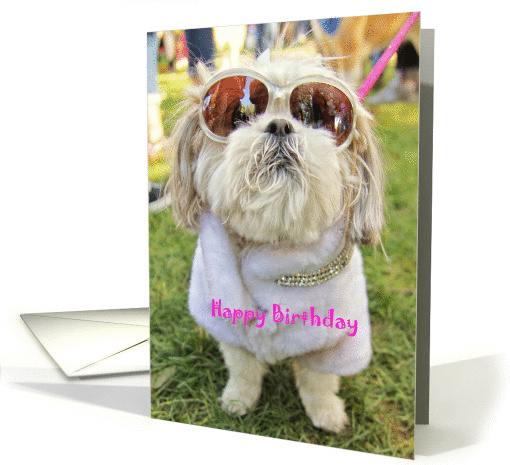 Dressed Up Glamor Pooch Shih Tzu Dog Birthday Card 1285436