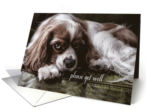 Get Well Soon Chocolate Labrador Retriever Dog Card 432144