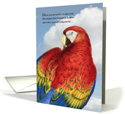 Loss Of A Bird Pet Sympathy Rainbow Macaw Parrot Card 958571