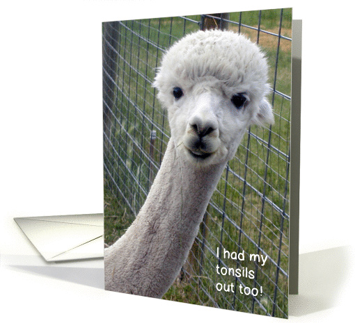 Get Well Tonsillectomy Alpaca Card 847841