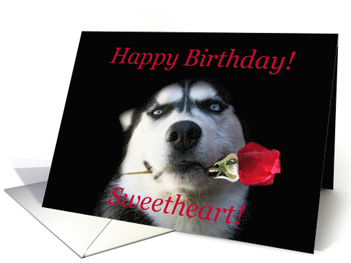 Happy Birthday Husky Dog With Rose Card 1261988