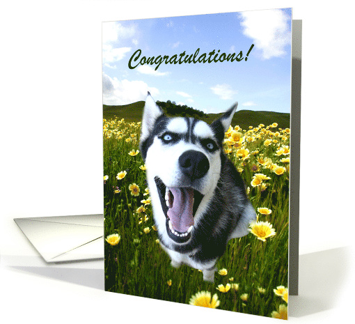 Congratulations On Your Adoption Cute Husky Card 1366478